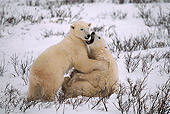 BEA 06 HB0006 01