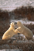 BEA 06 HB0008 01