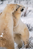 BEA 06 HB0009 01