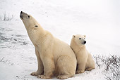 BEA 06 HB0013 01
