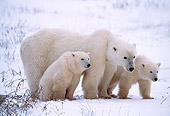 BEA 06 NE0001 01