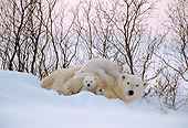 BEA 06 NE0005 01