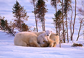 BEA 06 NE0006 01