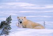 BEA 06 NE0008 01