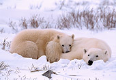 BEA 06 NE0009 01