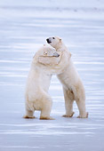 BEA 06 NE0012 01