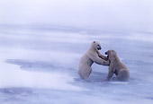 BEA 06 NE0013 01