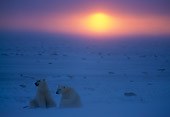 BEA 06 NE0015 01