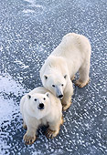 BEA 06 NE0016 01