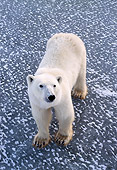 BEA 06 NE0017 01