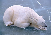 BEA 06 NE0018 01