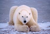 BEA 06 NE0019 01