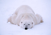 BEA 06 NE0021 01