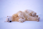 BEA 06 NE0023 01
