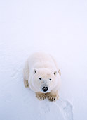 BEA 06 NE0028 01