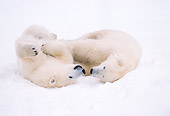 BEA 06 NE0030 01