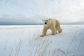 BEA 06 NE0036 01