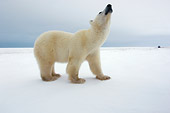 BEA 06 NE0044 01