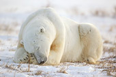 BEA 06 NE0050 01