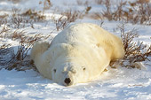 BEA 06 NE0052 01