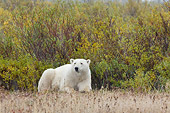 BEA 06 NE0055 01