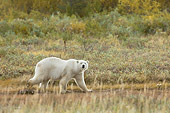 BEA 06 NE0056 01