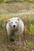 BEA 06 NE0059 01