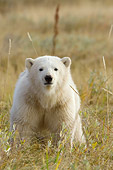 BEA 06 NE0060 01