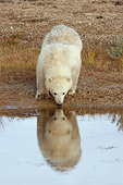 BEA 06 NE0062 01