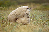 BEA 06 NE0068 01