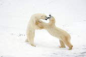 BEA 06 NE0070 01
