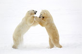BEA 06 NE0071 01