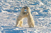 BEA 06 NE0073 01