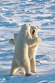 BEA 06 NE0074 01