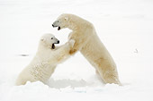 BEA 06 NE0075 01