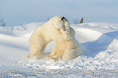 BEA 06 NE0076 01