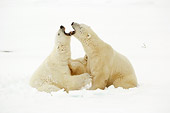 BEA 06 NE0077 01