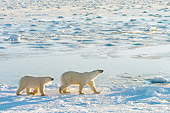 BEA 06 NE0078 01
