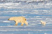 BEA 06 NE0079 01