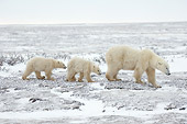 BEA 06 NE0081 01