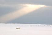 BEA 06 NE0084 01