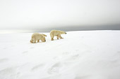 BEA 06 NE0085 01