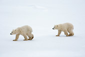 BEA 06 NE0086 01