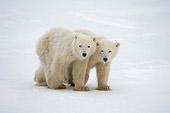 BEA 06 NE0088 01