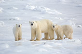 BEA 06 NE0089 01