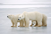 BEA 06 NE0090 01