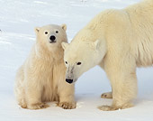 BEA 06 NE0093 01