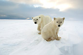 BEA 06 NE0094 01