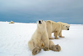 BEA 06 NE0095 01