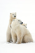 BEA 06 NE0098 01